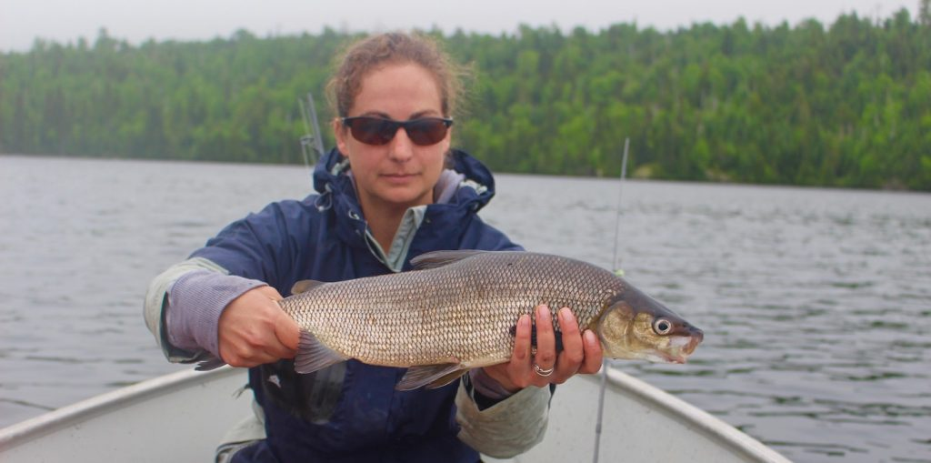 Lake Whitefish, Nipigon