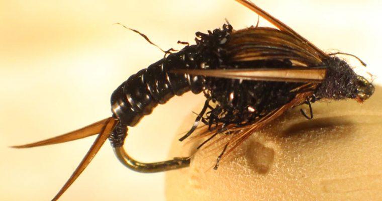 Black Stonefly